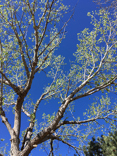 Blue Sky Tree website 1